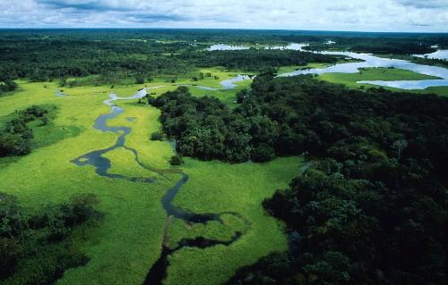 Amazzonia(c) WWF-Canon_ Michel ROGGOmedia